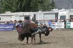 Rodeo 2006